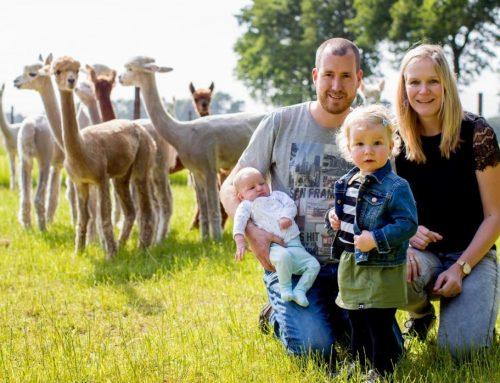 Vol in de Wol bij Alpacafarm Vorstenbosch