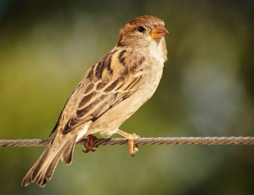 Kinderfeest: Het vogelfeest!