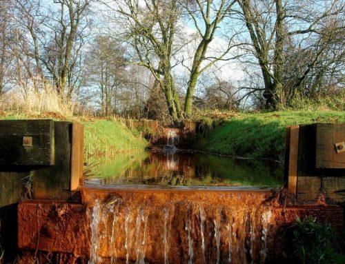 Natuurcentrum De Maashorst maakt tocht naar knuppelbrug