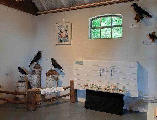 Tentoonstelling 'Raven in De Maashorst'