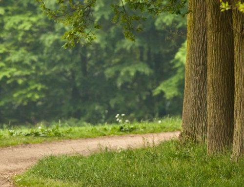 Activiteiten bij Recreatiepark De Heidebloem